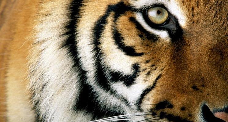 WWF 2 745x400